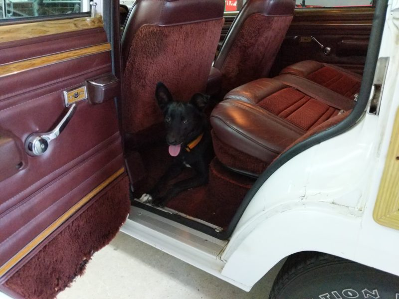 King enjoying the Wagoneer.
